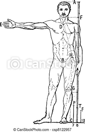 Human proportions, vintage engraving. - csp8122957
