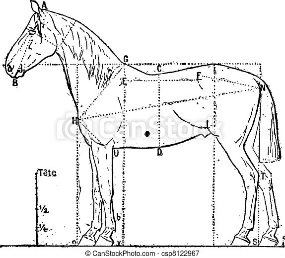 Proportions of the horse, vintage engraving. - csp8122967