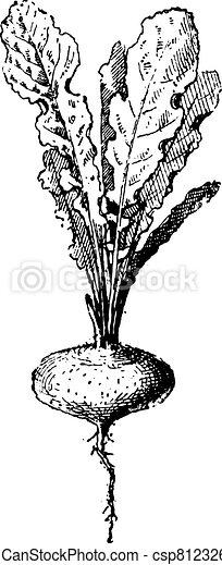 Rave plant, vintage engraving. - csp8123269