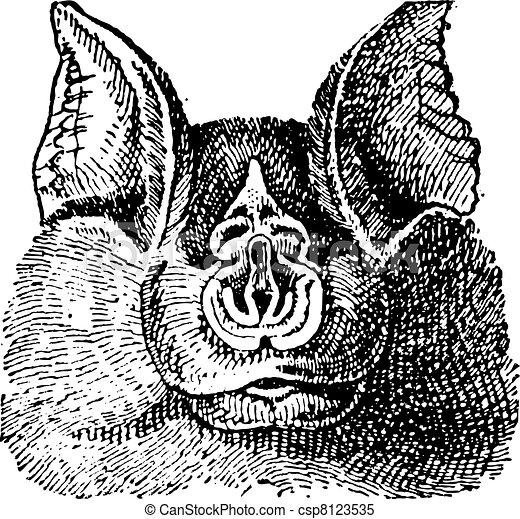 Horseshoe bats (Rhinolophidae), vintage engraving. - csp8123535