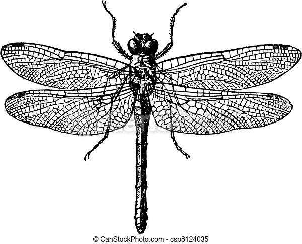 Fig 1. Dragonflies, vintage engraving. - csp8124035