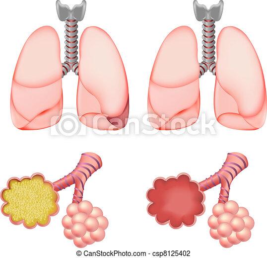 Alveoli In Lungs Set - csp8125402