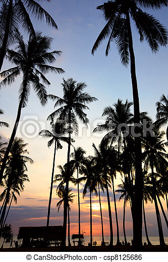 Palm Tree Sunset - csp8125686