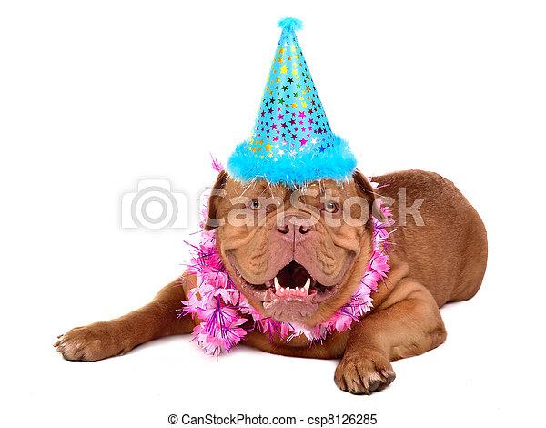 francés, mastín, perrito, fiesta, cono - csp8126285