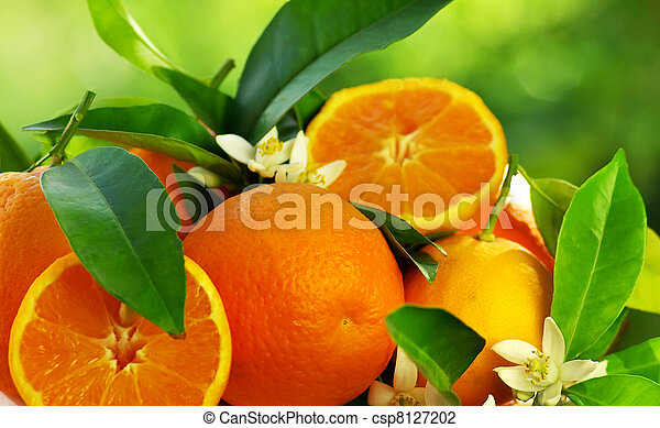 orange fruits and flowers - csp8127202