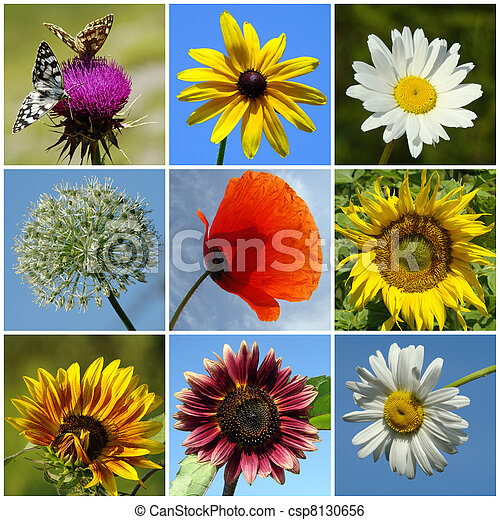 collage of colorful rural flowers - csp8130656