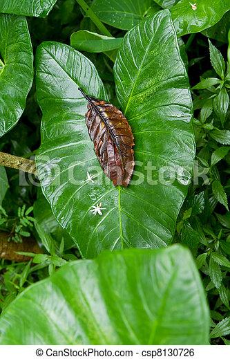 stock bild von s kartoffel blatt in tropen s kartoffel pflanze csp8130726 suchen. Black Bedroom Furniture Sets. Home Design Ideas