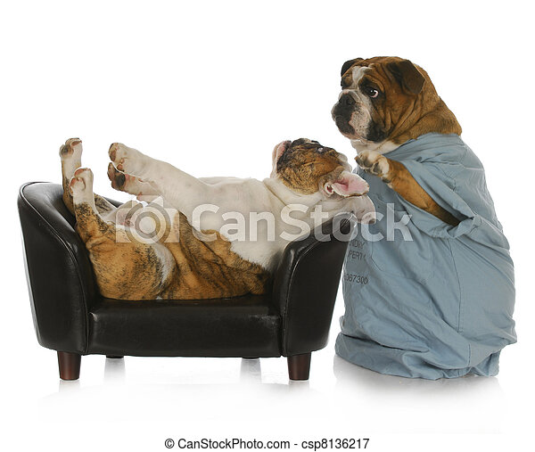 veterinary care - csp8136217
