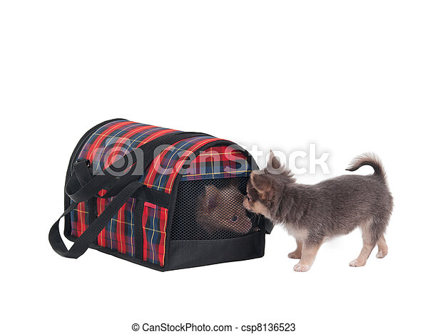 Two chihuahua puppies and transportation cage for small pets - csp8136523