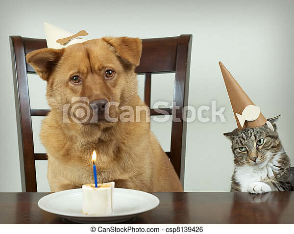 Pet Birthday party - csp8139426