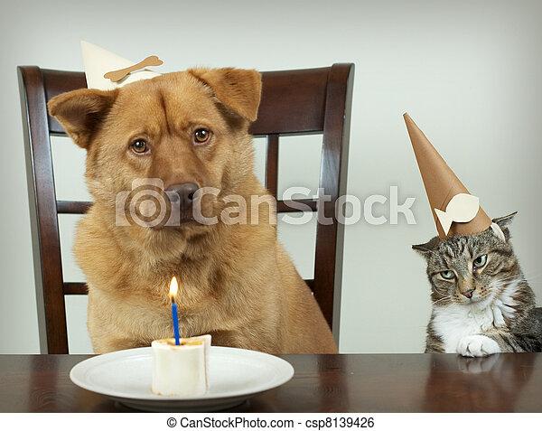 Pet Birthday party - csp8139426