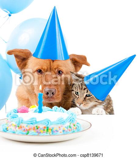 寵物, 黨, 生日 - csp8139671