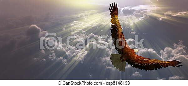 Eagle in flight above tyhe clouds - csp8148133