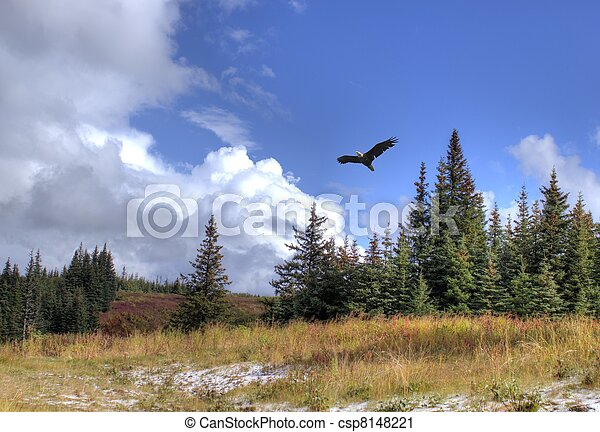 Soaring eagle with scenery - csp8148221