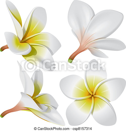 Plumeria Flower Line Drawing Hawaiian necklace flowers -
