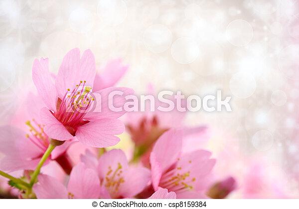 Cherry blossoms background - csp8159384