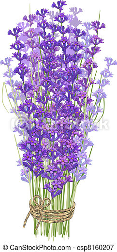 Bouquet of lavender - csp8160207