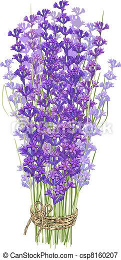Bouquet of lavender - csp8160207