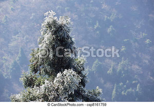 Icy pine tree branch - csp8161759