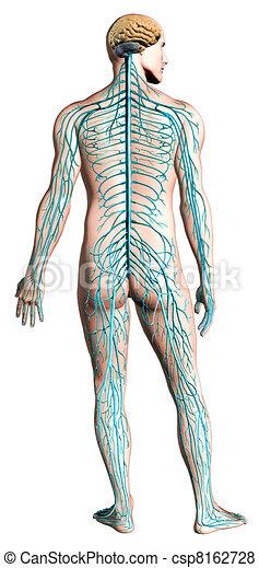Human nervous system diagram. - csp8162728