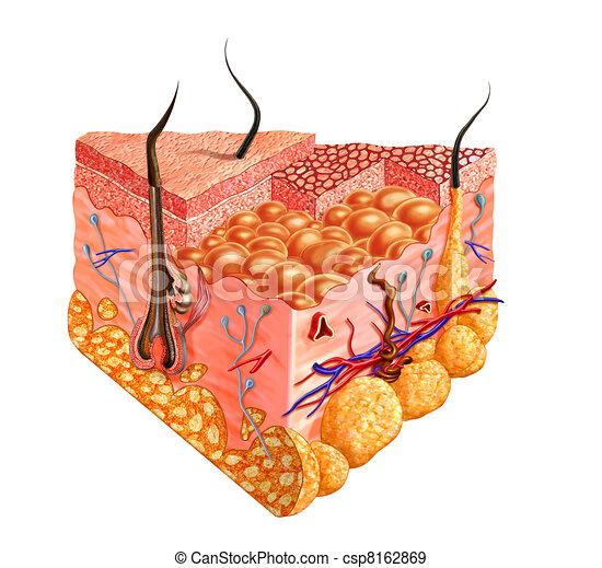 Human skin cutaway diagram, with several details. - csp8162869