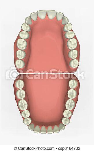dentaire, Diagramme - csp8164732