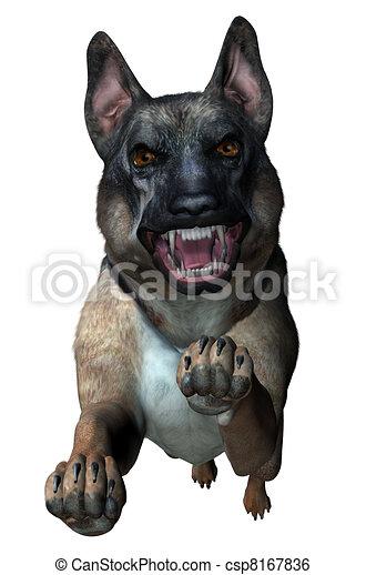 German Shepherd Attacks - csp8167836