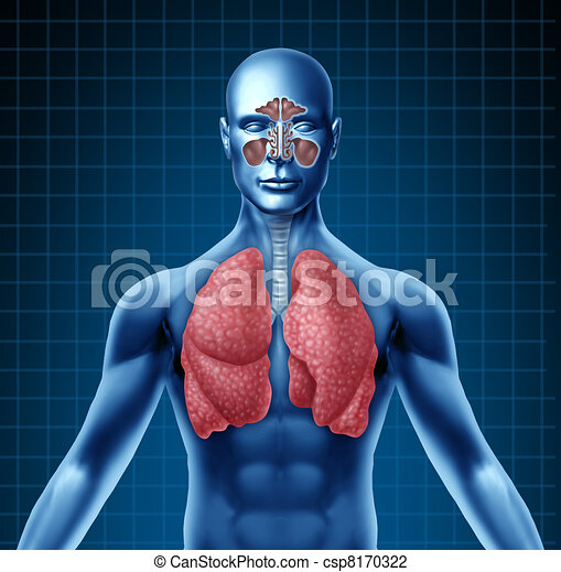 Human sinus and respiratory system - csp8170322