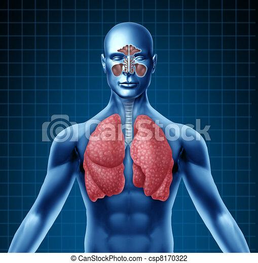 Human sinus and respiratory system - csp8170322