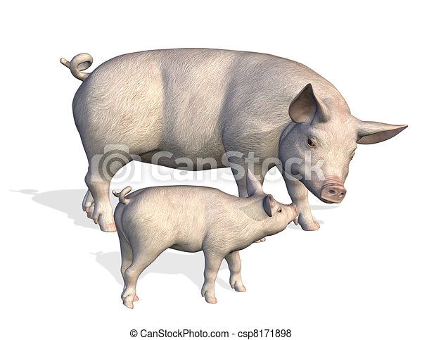 Mother Pig with Piglet - csp8171898