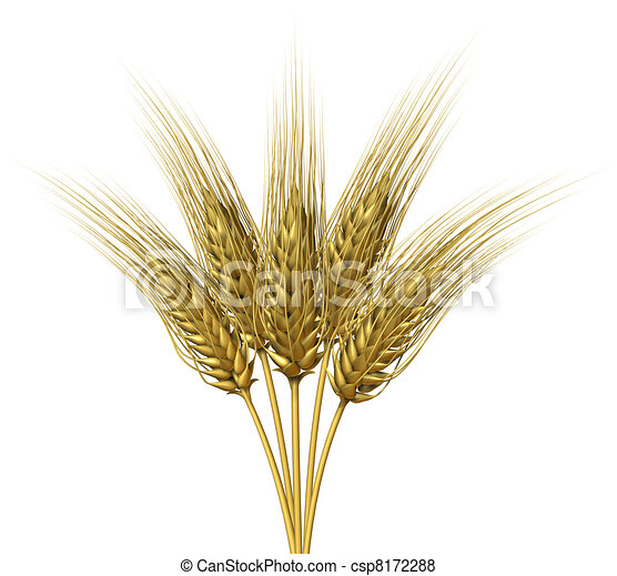 Frumento, disegno, bianco, fondo, gruppo, crescente, naturale, erba