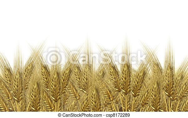 Wheat harvest horizon - csp8172289