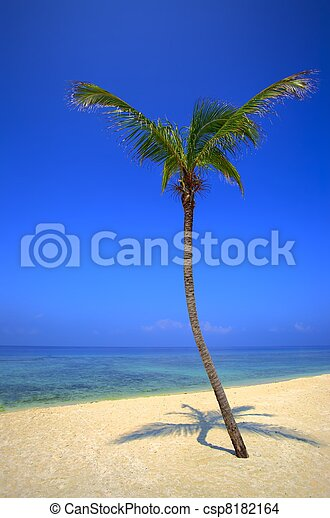 palmtree is on an uninhabited island - csp8182164