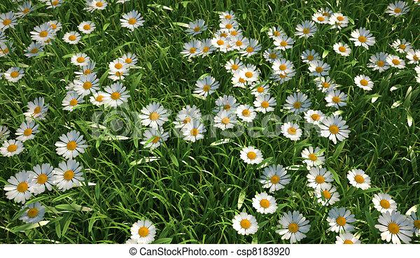 Birds Eye View Art Bird Eye View of a Grass