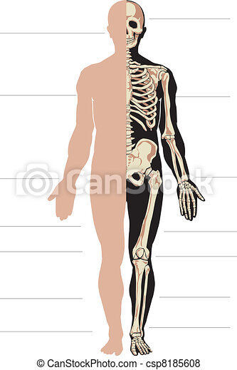 Human body and skeleton - csp8185608