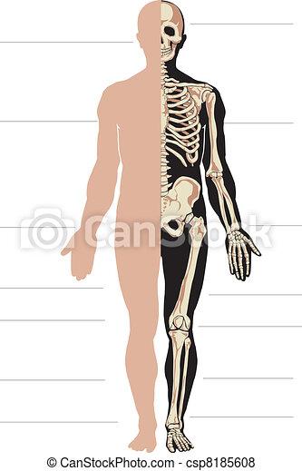 Human body and skeleton - csp8185608