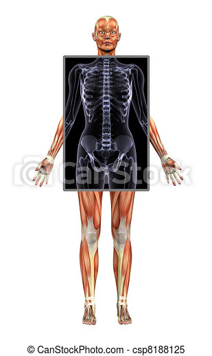 Female Musles with X-Ray - csp8188125