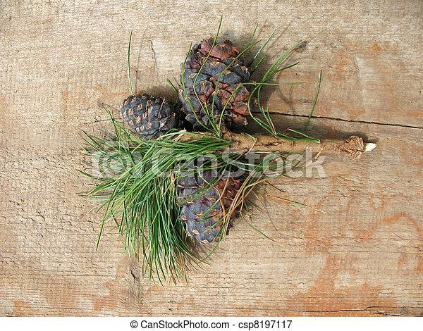 Pinus sibirica cones - csp8197117