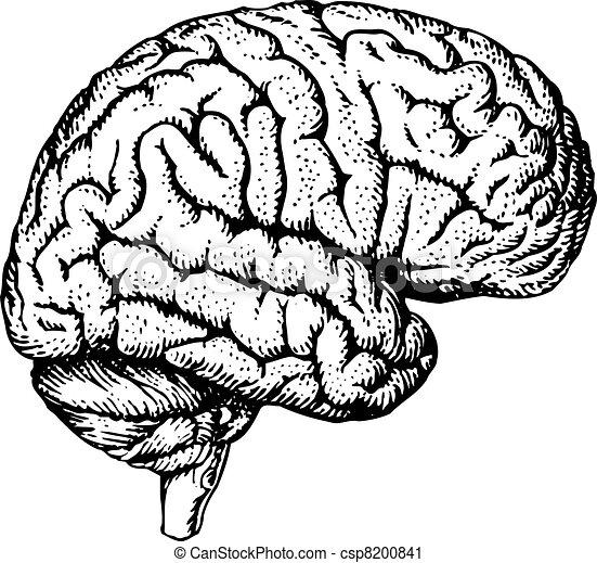 simple human brain drawing