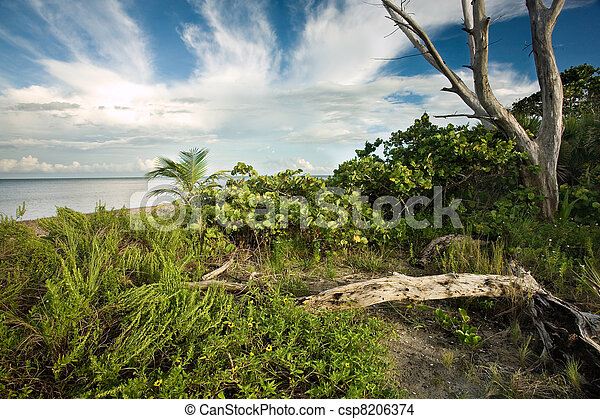 Beautiful pristine South Florida wilderness - csp8206374