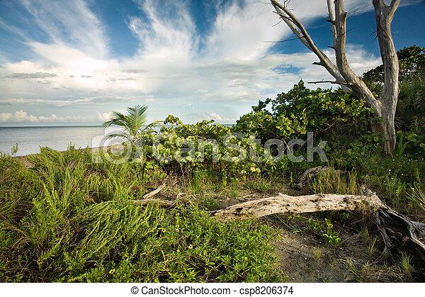 Beautiful pristine South Florida wilderness - csp8206374