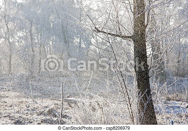 Snowing in a winter forest with the bright sun shining through the trees