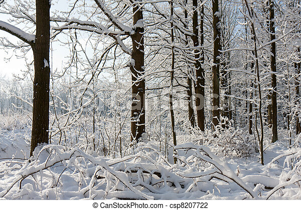 Forest in winter with trees covered by snow