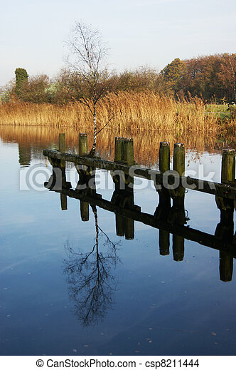 Birch tree thrives on post in canal - csp8211444