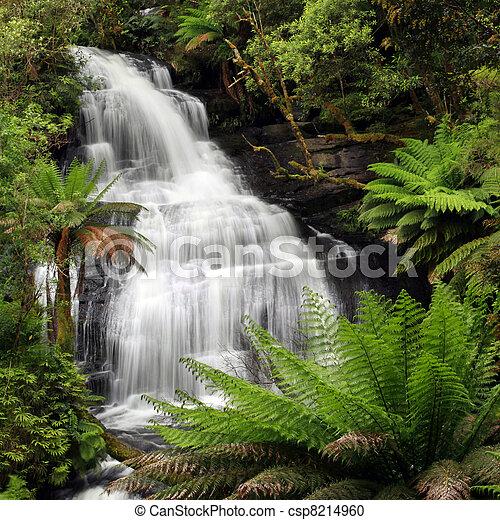 Rainforest Waterfall - csp8214960