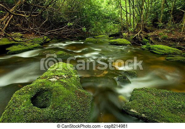 Beautiful lush rain forest stream - csp8214981