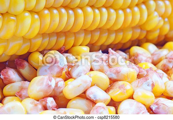 corncob and corn kernels - csp8215580
