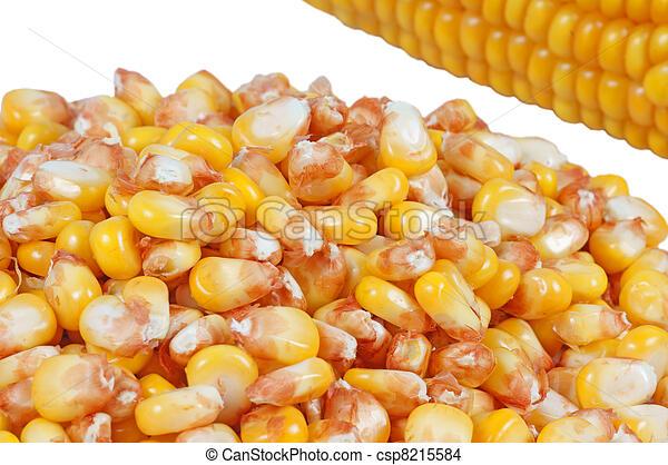 corncob and corn kernels - csp8215584