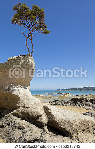 Tree on the rock - csp8218743