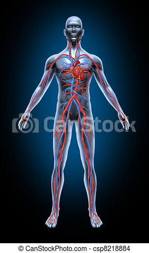 Human Blood Circulation - csp8218884